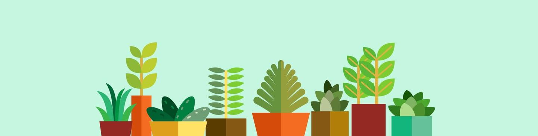blog-plants