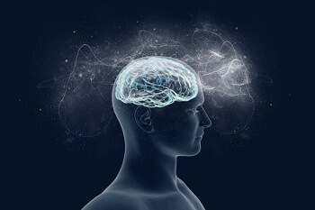 How does the brain process language?