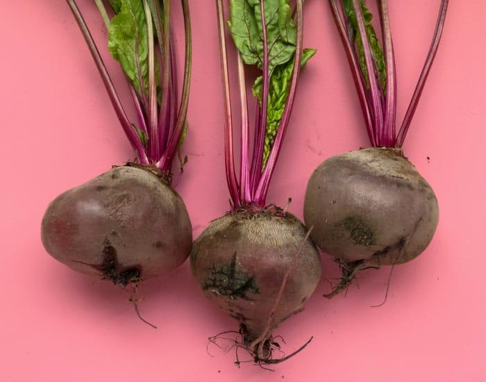 beet-plant