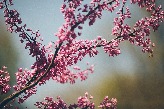 colour-psychology-pink