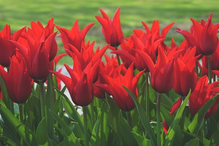 colour-psychology-red