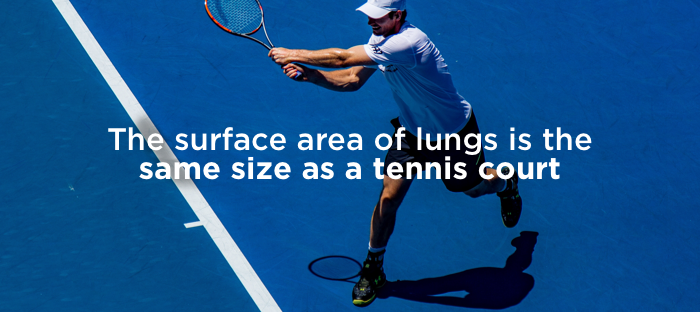 fact-about-lungs