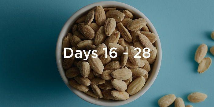 period-survival-days-16-28.jpeg