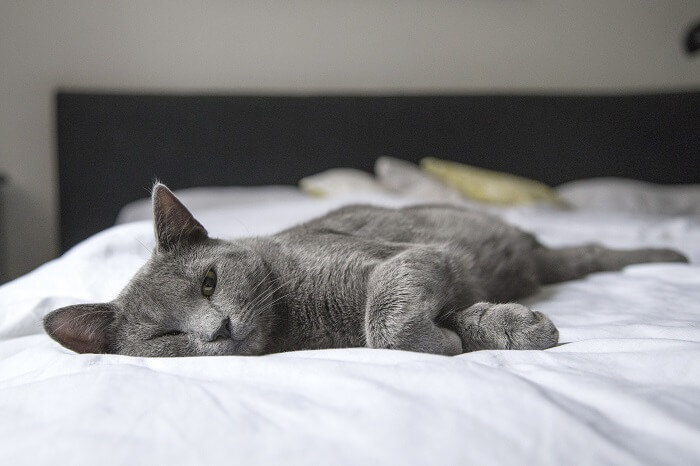 Do you let your cat sleep in your bed?
