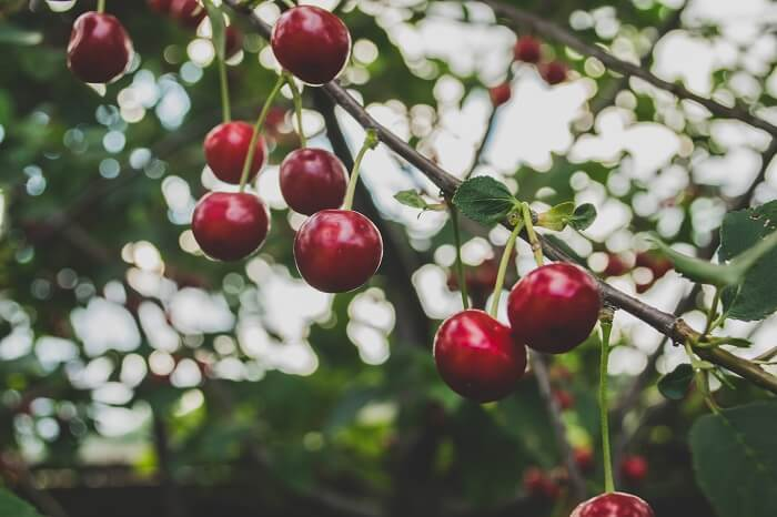 Surprisingly, cherries contain a substance that will help you get to sleep.