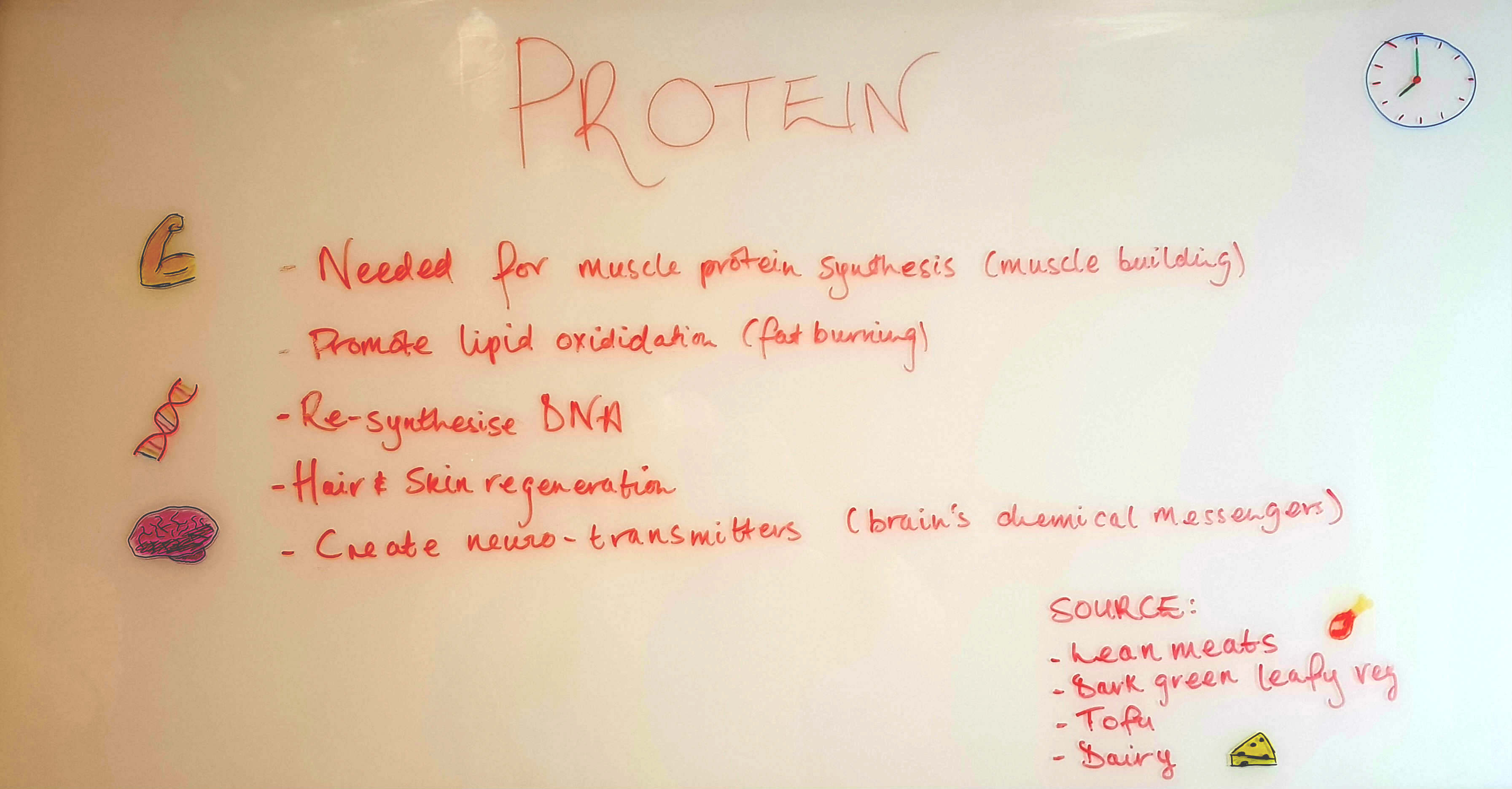 Protein is needed for Muscle building, fat burning, re-synthesising DNA and creating neuro-transmitters